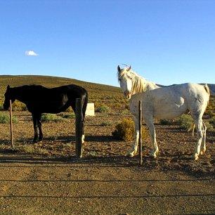 karoo-horseriding